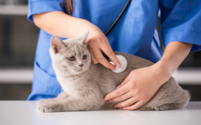 Thinking About A Cat? Consider These Tips