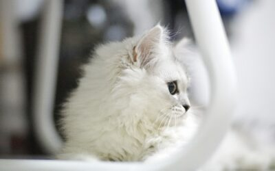 Special Tips on Cat Care and Grooming