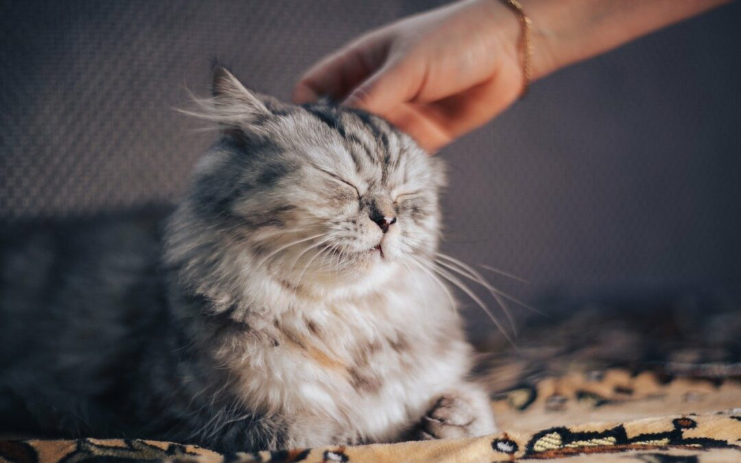 Cat Petting Guide: How to Pet a Cat With the Right Touch